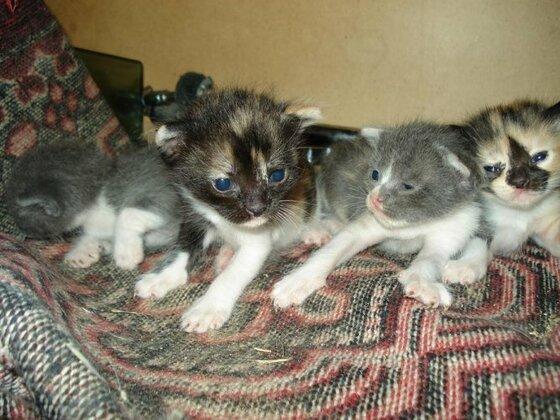 die kleine katze baby
