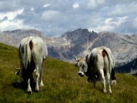 Südtirol Juli 2011